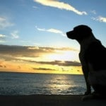 Animals Said to Have Spiritual Experiences