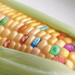 Genetically Altered Food… Think About It