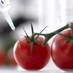10 Reasons to Stop GMO Foods Now
