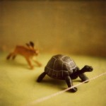 tortoise and hare 300x300 150x150 Never Give Up On Your Dreams