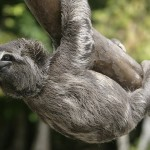 Mystery of the Pooping Sloth – Science on the Web #55